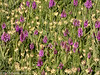 18-Jun-18 Field of Orchid.