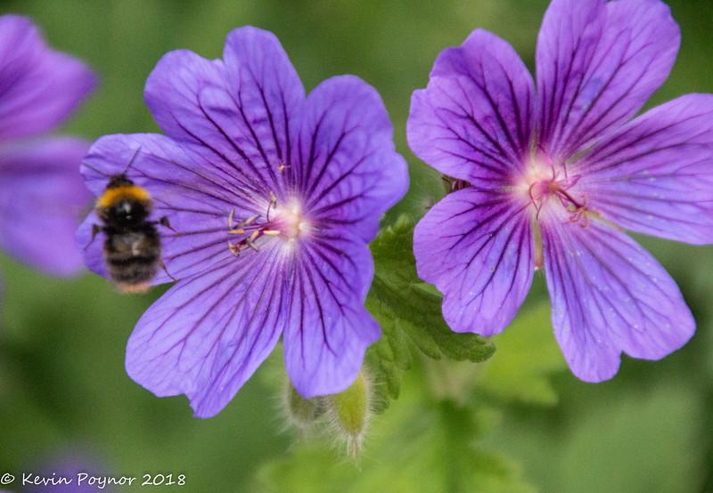 10-Jun-18 Bee exits stage left.....