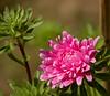 20-Oct-18 Pink Flower