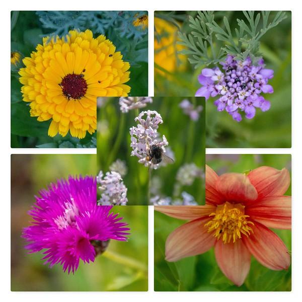 29-Jun-18 Around the garden 2