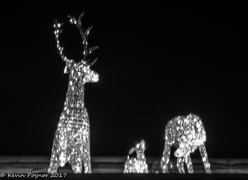 3-Jan-18 Crystal Deer