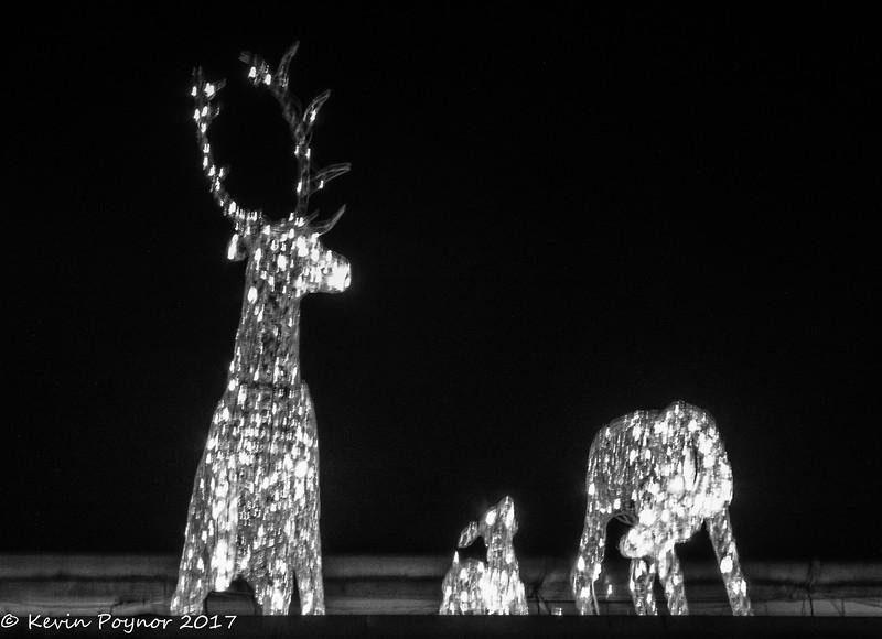 3-Jan-18 Crystal Deer