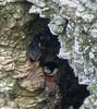 21-Jul-18 Puffin Hide and Seek.