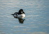 23-Jan-18 Goldeneye
