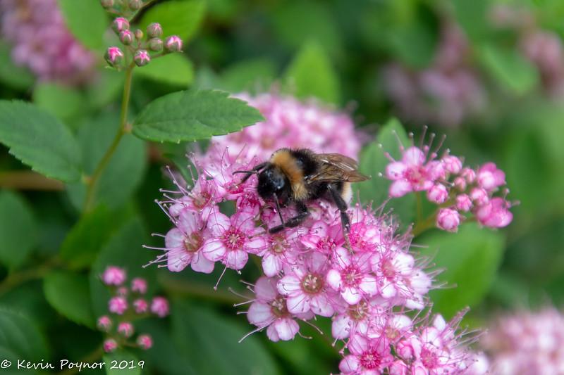 25-Oct-19 Feeding Bee.
