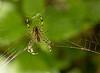 S for Spider (Garden variety)