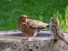 29-May-20 Avian Water Cooler Chat.