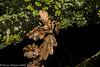 29-Nov-20 Leaves and Lichen