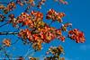 3-Dec-20 Autumn Colour.