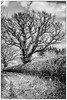 13-Apr-21 Hedgerow Mono.