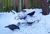 5-Feb-20 Feeding in the snow