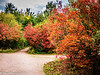 23-Oct-21 Autumn Colour at Brandon Marsh Nature Reserve