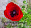 8-Nov-15 - UK Remembrance Sunday.