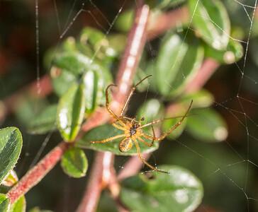 29-Sep-15 Yet Another Garden Spider