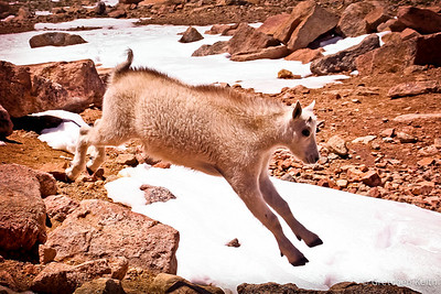 Leaping on Mount Evans-8003-l