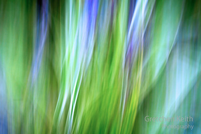 September 2011 - Liriope (Variation of the abstract made with camera motion, inspired by Orton.)