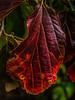 Autumn Colour<br /> <br /> Preset: Potent Extreme