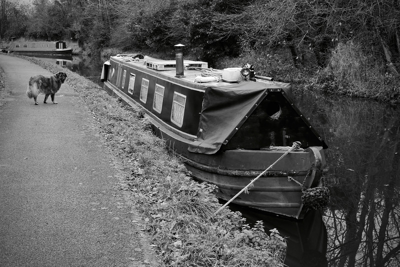 Moored Boat And Dog