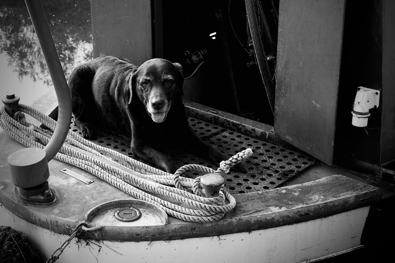 """Jess"" The Old Narrowboat Dog"