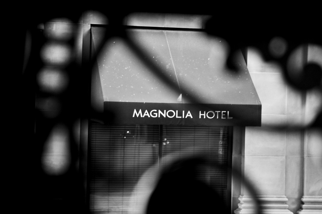 Magnolia-3693