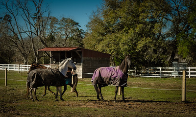 Horse Frolic-