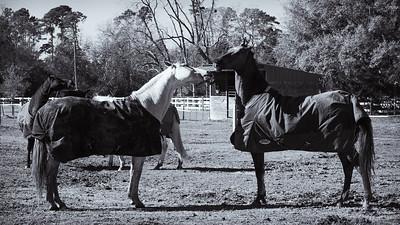 Horse Frolic--2