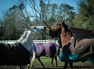 Horse Frolic-6034