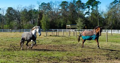 Horse Frolic-5997