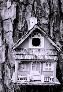 Bird house DSC_3777-Edit-1