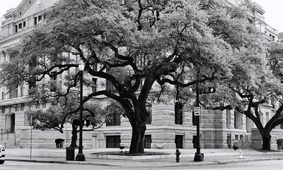 urban treeDSC_4332-Edit-1
