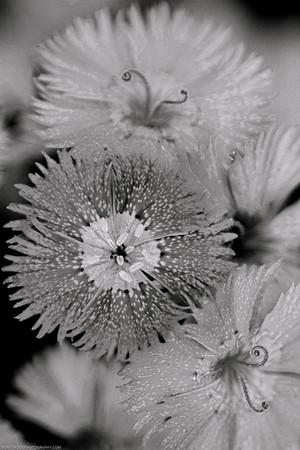flowers DSC_3765-Edit-1
