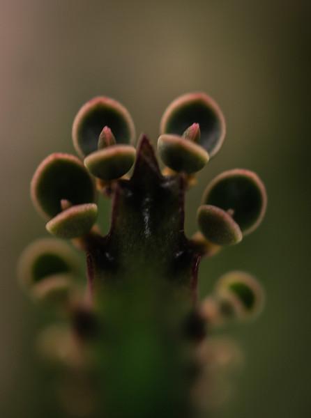 Succulent-4589