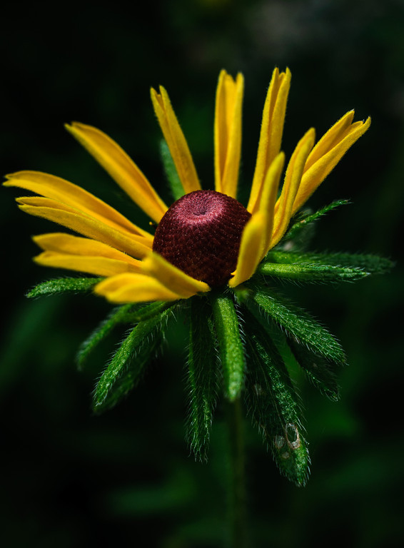 daisy-9861