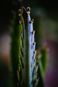 Succulent--3