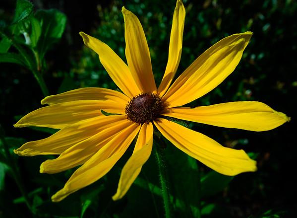 yellow flower-7665