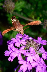 Moth-4843