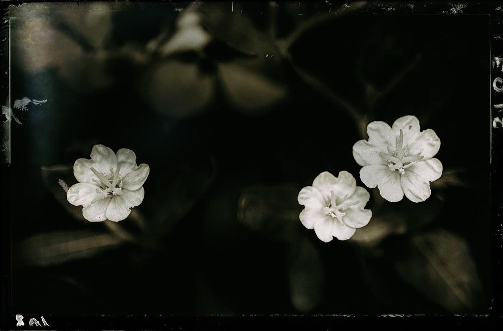 tiny wildflowers 041715--2