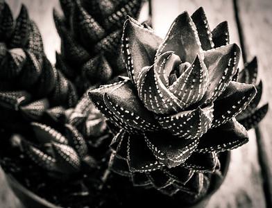 succulent 2015-