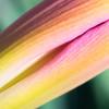 Lily DSC_8669-Edit-1