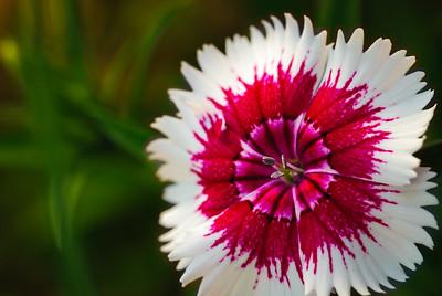 inside flower-3589-2