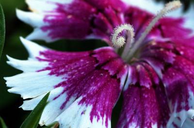 inside flower--2