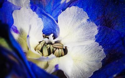 inside flower-