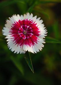 inside flower-3589