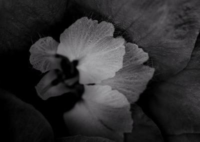 flower mind-2