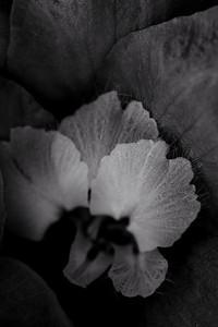 flower mind-2-2