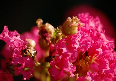 pollen glow