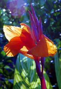 orange tropical