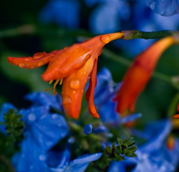 Orange over blue-10
