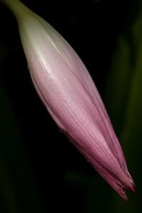 silken bloom-44