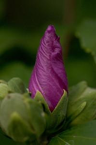 purple cone-39